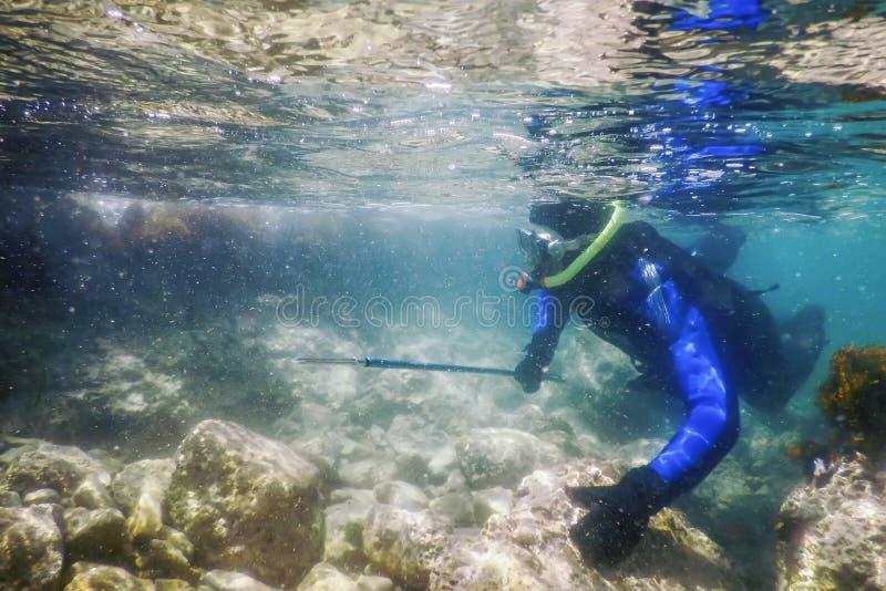 Spearfishing nurka dopłynięcie w Płytkiej wodzie morskiej obraz stock