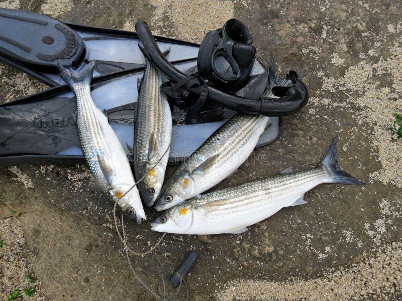 spearfishing Ryba, flippers i maska na skale, zdjęcia royalty free