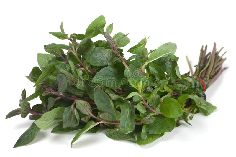 Download Spearmint herb stock image. Image of peppermint, plant - 14858121