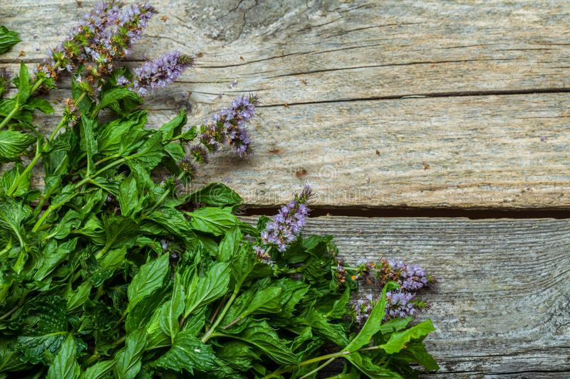 Spearmint on the table. Fresh spearmint on the vintage wooden table royalty free stock photo