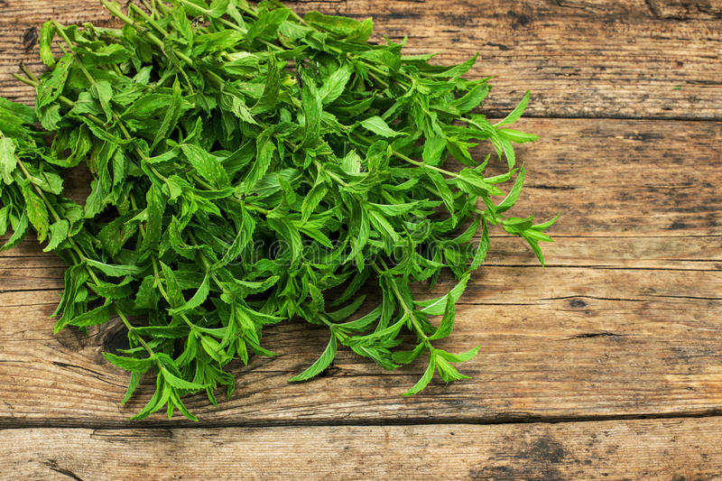 Spearmint on a wooden table royalty free stock photo