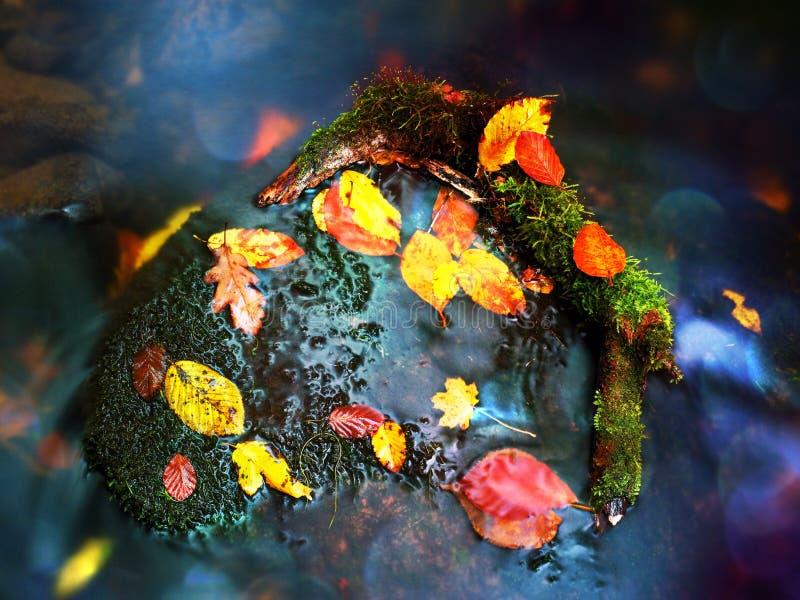 Specchio naturale nel telaio arancio Il faggio caduto lascia in acqua del fiume della montagna immagine stock libera da diritti