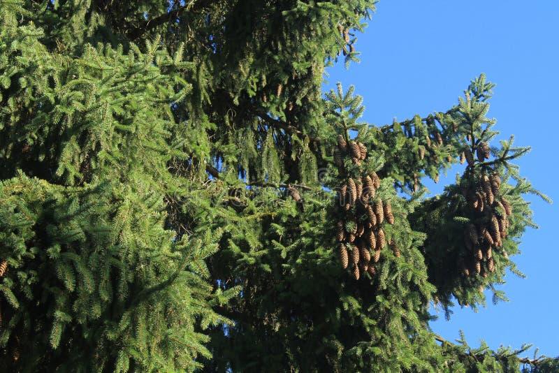 Specht in einem Baum stockfoto