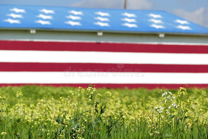 Special American flag style house. With flower field and blue sky royalty free stock image