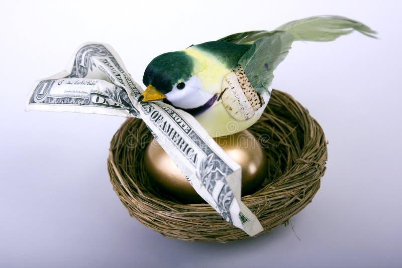 Special de pássaro adiantado imagem de stock