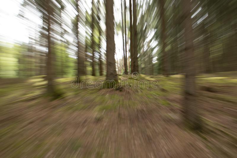 Special effect tree picture, motioned royalty free stock photography