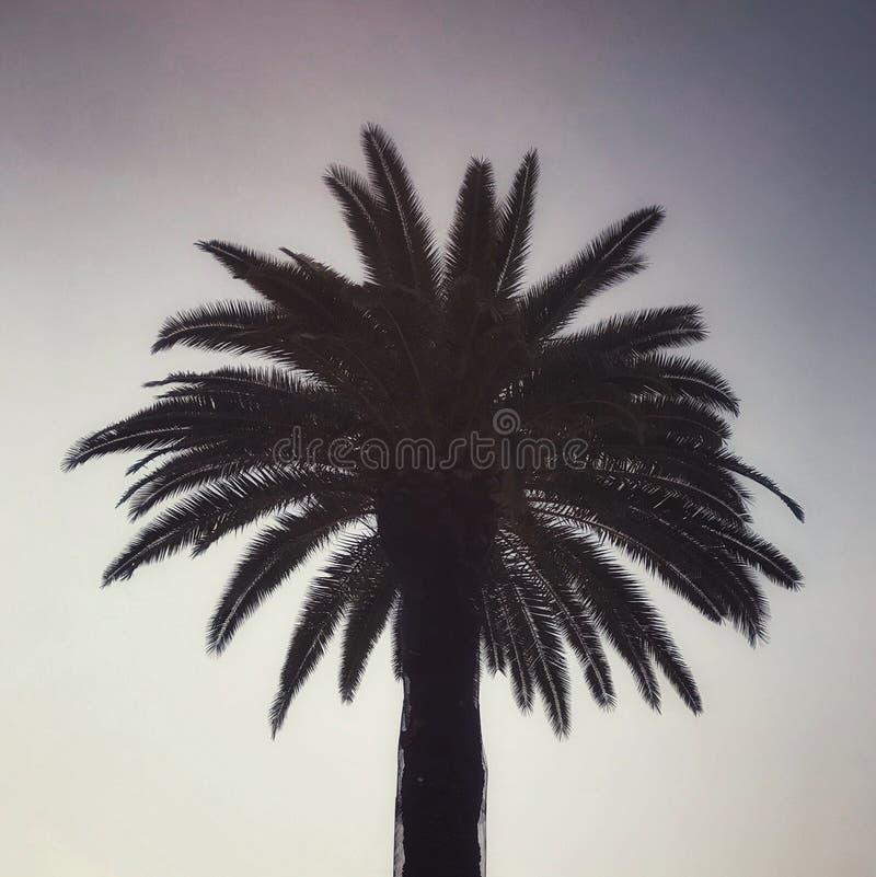 Special eftermiddagpalmträd arkivbilder