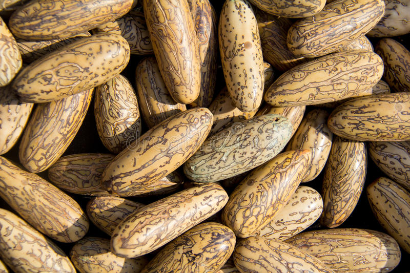 Special nuts royalty free stock photography