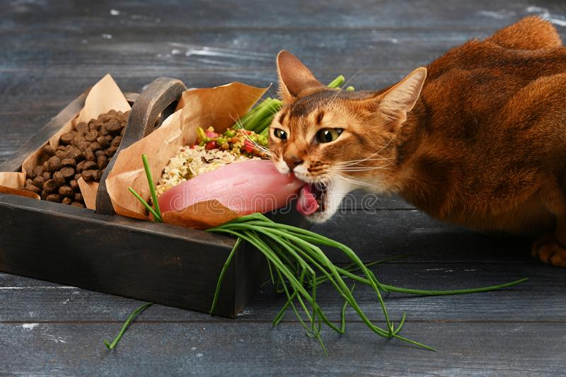 Special pet food VS natural pet food. Ingredients turkey, groats, rise, greens and sprouts in brown wooden box. stock photography