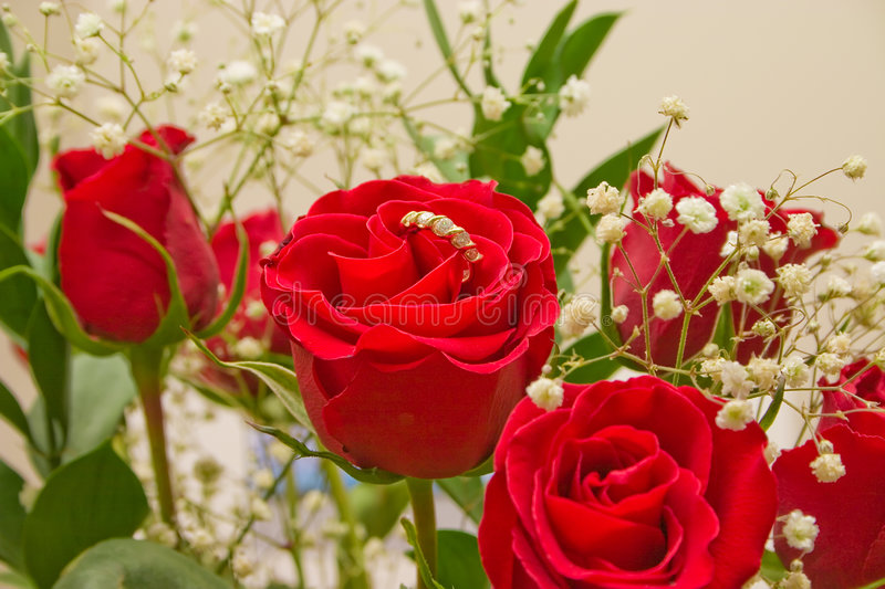 Special Red Rose With A Ring Stock Photography