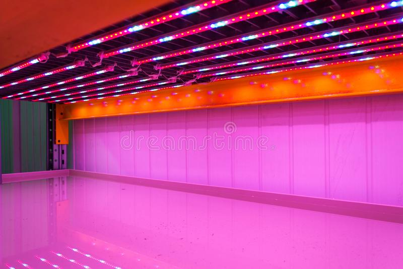 Special red white and blue LED lights belts above empty shelves in aquaponics system combining fish aquaculture with hydroponics. Cultivating plants in water royalty free stock photo