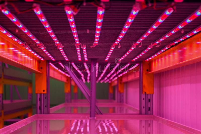 Special red white and blue LED lights belts above empty shelves in aquaponics system combining fish aquaculture with hydroponics. Cultivating plants in water stock photos