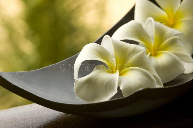 Special spa bloem royalty-vrije stock foto