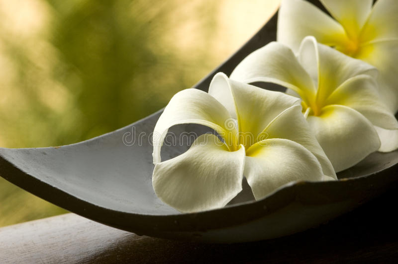 Download Special Spa Flower Royalty Free Stock Photo - Image: 9764345