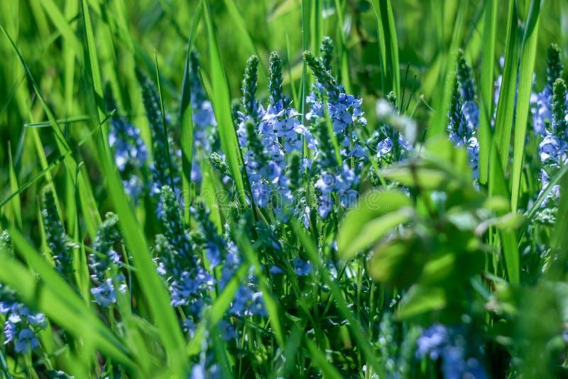 speciale bloem royalty-vrije stock afbeeldingen