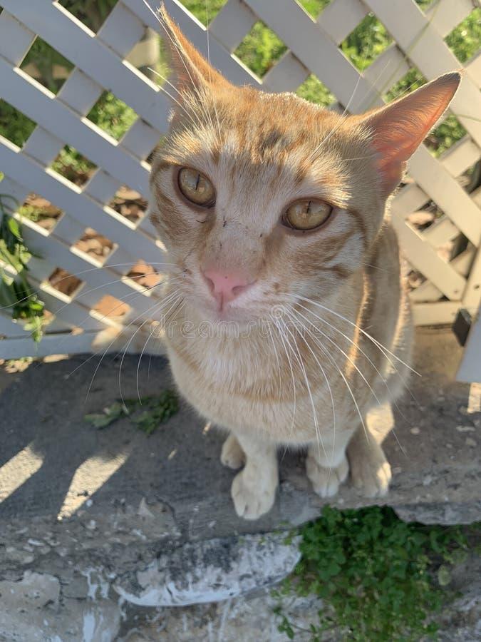 Speciale kat stock foto