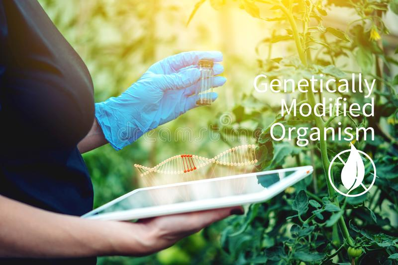 Specialistenagronoom die een steekproef van de grond en een tablet houden Milieuvriendelijke landbouwproductie stock illustratie