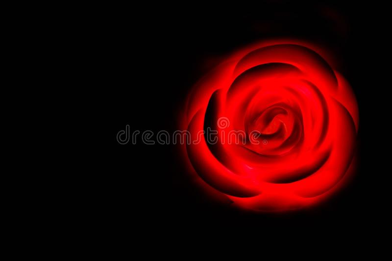 Specially prepared rose for Valentine`s Day stock photos