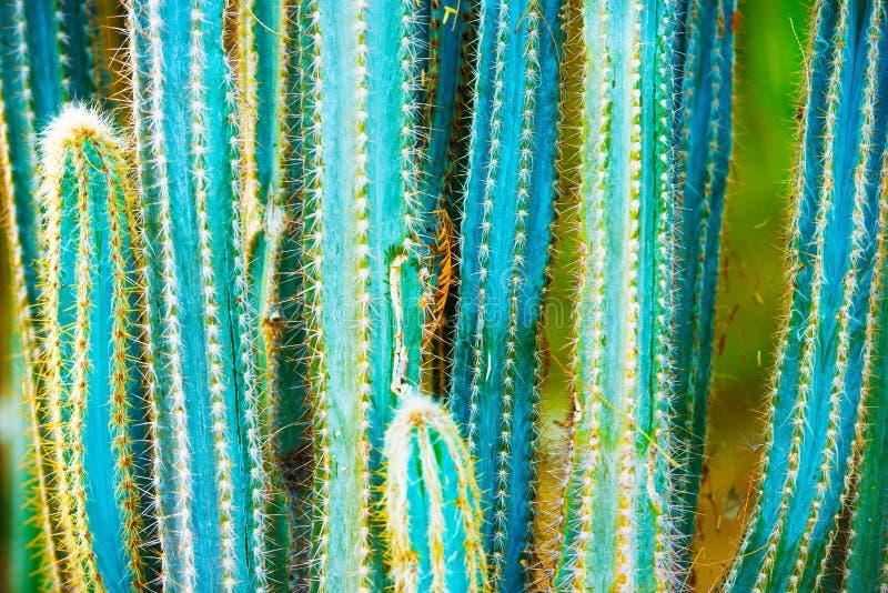 Specie del cactus fotografie stock