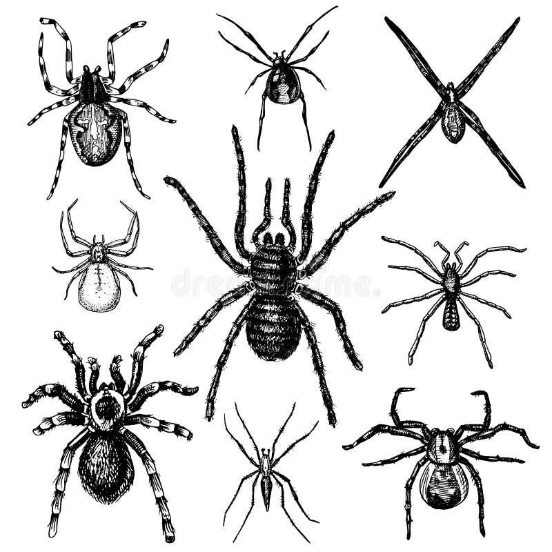 Specie dell'aracnide o del ragno, la maggior parte dei insetti pericolosi nel mondo illustrazione vettoriale