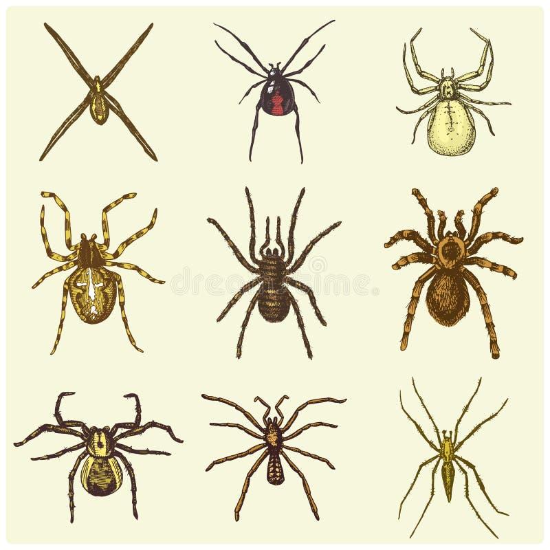 Specie dell'aracnide o del ragno, la maggior parte dei insetti pericolosi nel mondo, vecchia annata per Halloween o progettazione royalty illustrazione gratis