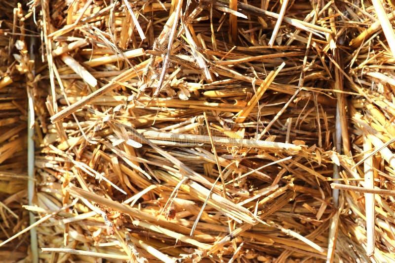 Specificerat tätt upp yttersida av sugrör och hö som ses på en lantgård royaltyfria foton