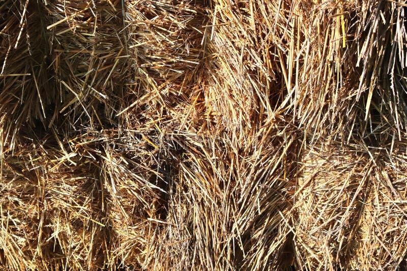 Specificerat tätt upp yttersida av sugrör och hö som ses på en lantgård royaltyfri fotografi