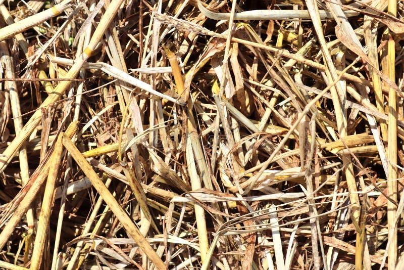 Specificerat tätt upp yttersida av sugrör och hö som ses på en lantgård arkivbild