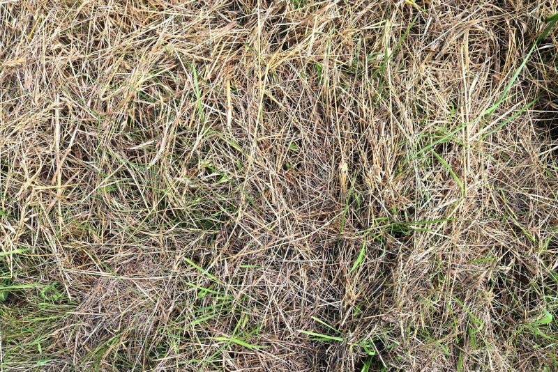 Specificerat tätt upp yttersida av sugrör och hö som ses på en lantgård royaltyfri foto