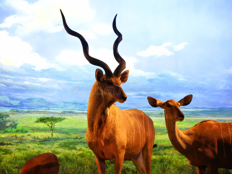 The specimens of the Africa wild animals royalty free stock image