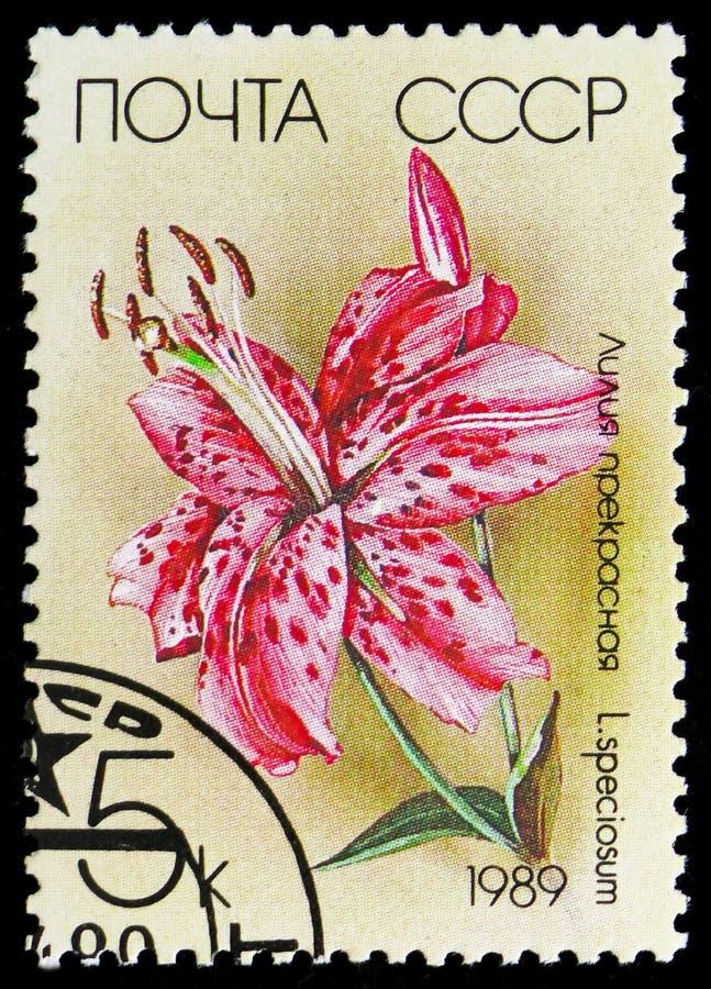 Speciosum лилии, serie лилий, около 1989 стоковое изображение rf