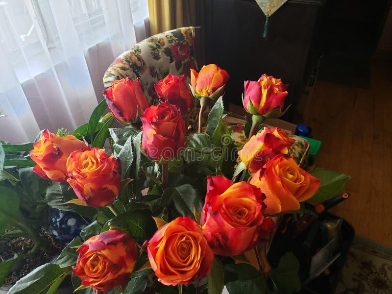 Specjalność róże fotografia royalty free