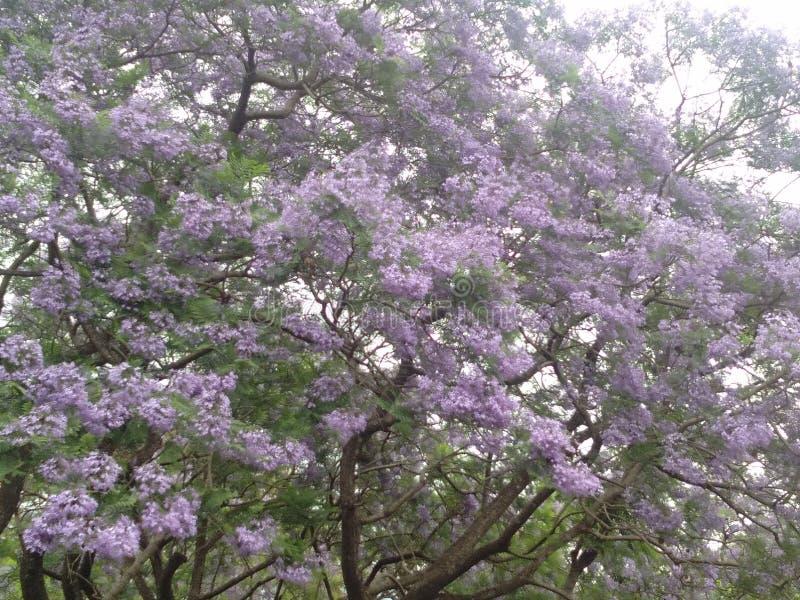 Specjalny drzewo z małym kwiatem obrazy royalty free
