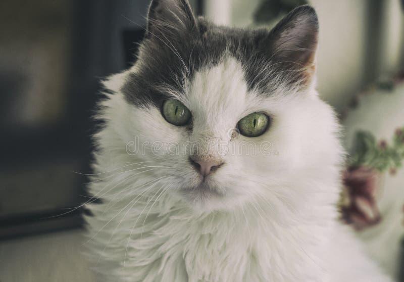 Specjalny Przyglądający kot zdjęcia royalty free