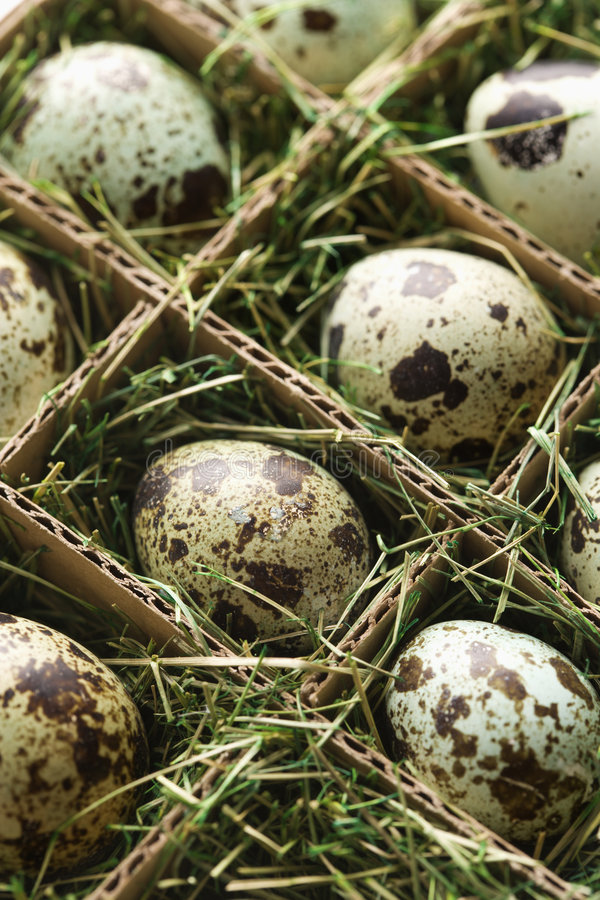 Speckled eggs. Speckled eggs packed in separate compartments royalty free stock photography