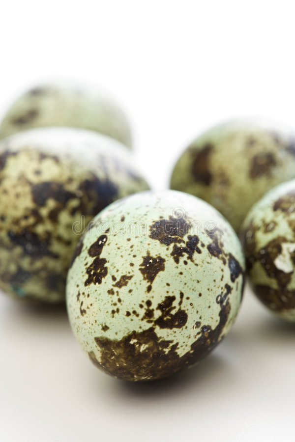 Speckled eggs. Studio still life of speckled eggs royalty free stock photo
