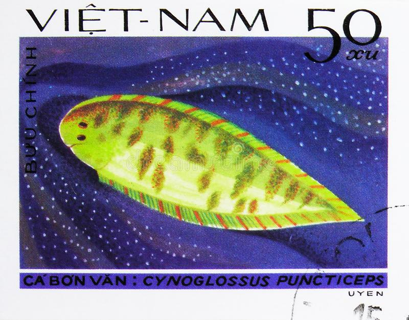 Speckled Tongue-sole (Cynoglossus puncticeps), Fish - Soles / Flatfish serie, circa 1982. MOSCOW, RUSSIA - AUGUST 4, 2019: Postage stamp printed in Vietnam shows royalty free stock photos