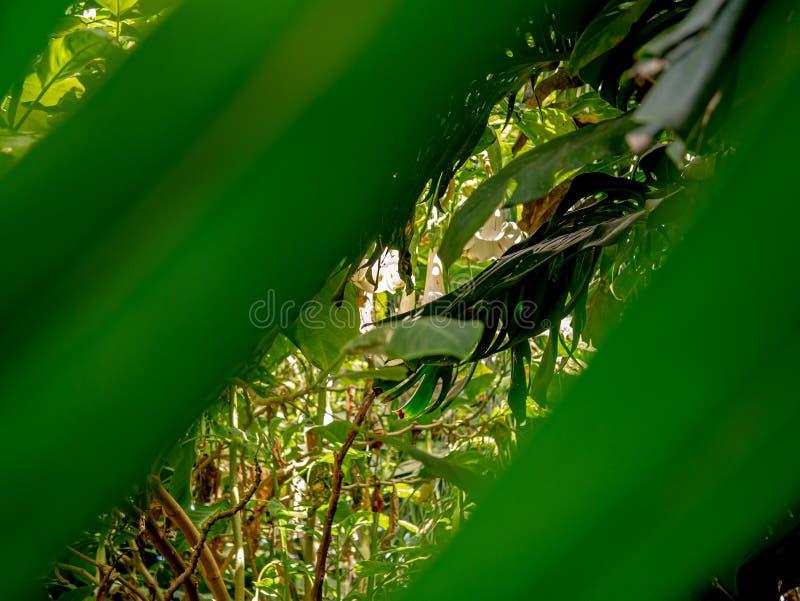 Spectaculaire mening van een mooie wilde wildernis stock afbeeldingen