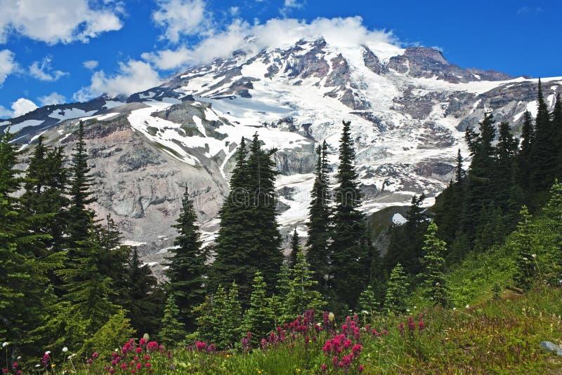 Spectaculaire Mt. Regenachtiger met wildflowers royalty-vrije stock afbeelding