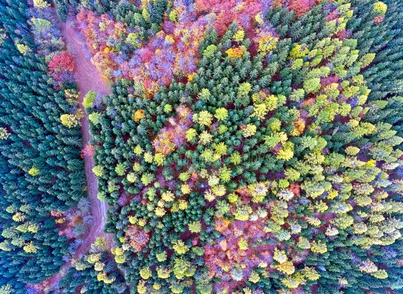 Spectacular aerial Drone views over a Forest in the foothills of the Swiss Jura Mountains. stock images