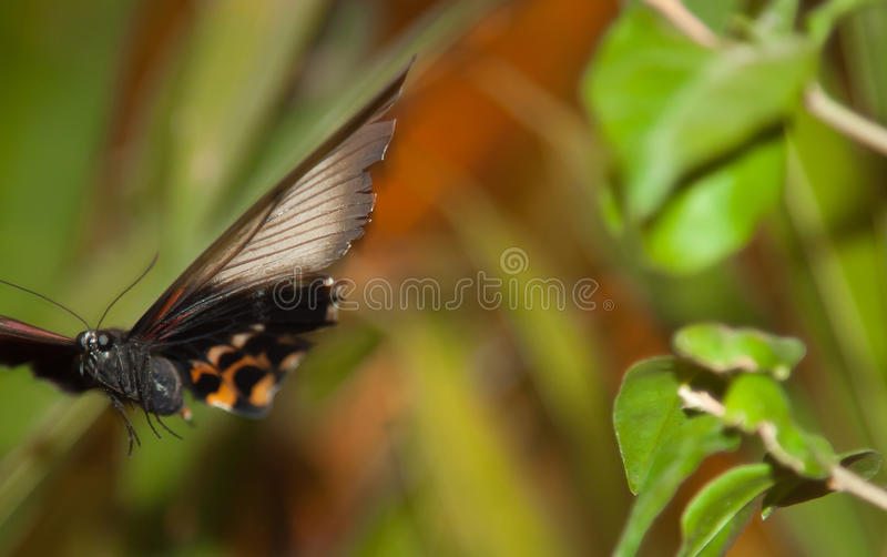 Spectacular beautiful butterfly on the leaf of a plant stock photo