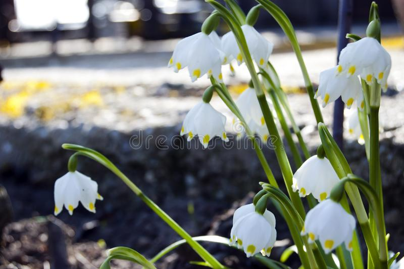 Spectacular, colorful early spring flowers in sunshine in the garden, selective focus, space for text stock images