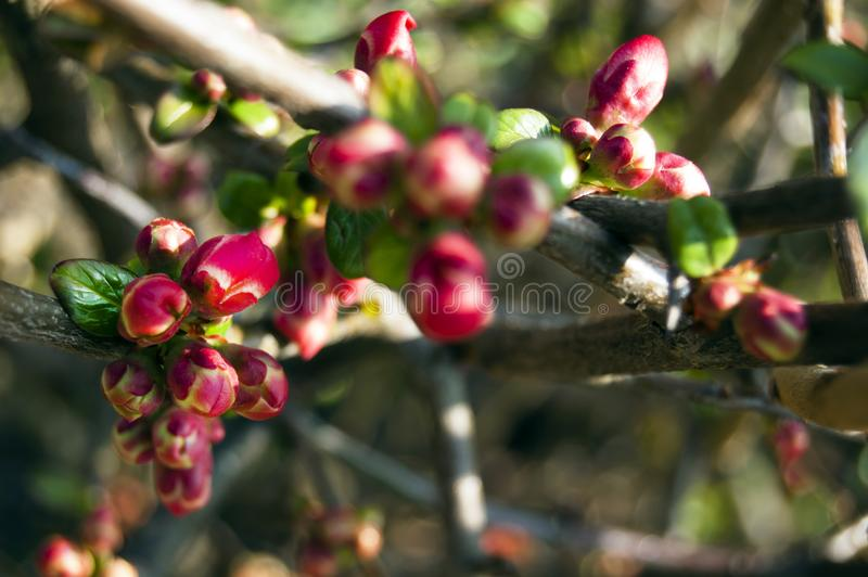 Spectacular, colorful early spring flowers in sunshine in the garden, selective focus, space for text stock photography