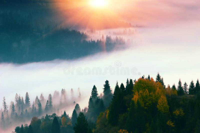 Spectacular foggy dawn image, awesome autumn morning in european mountains, forest on hill on background valley in fog and first r royalty free stock photo