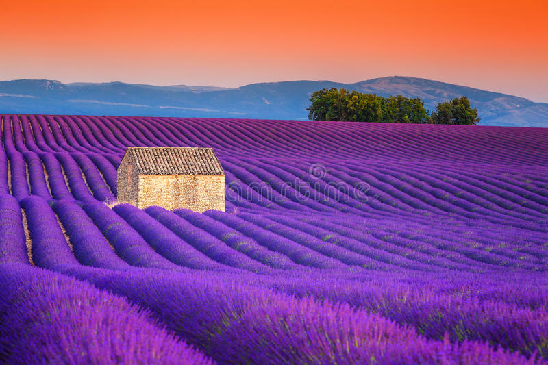 Spectacular lavender fields in Provence, Valensole, France, Europe stock image