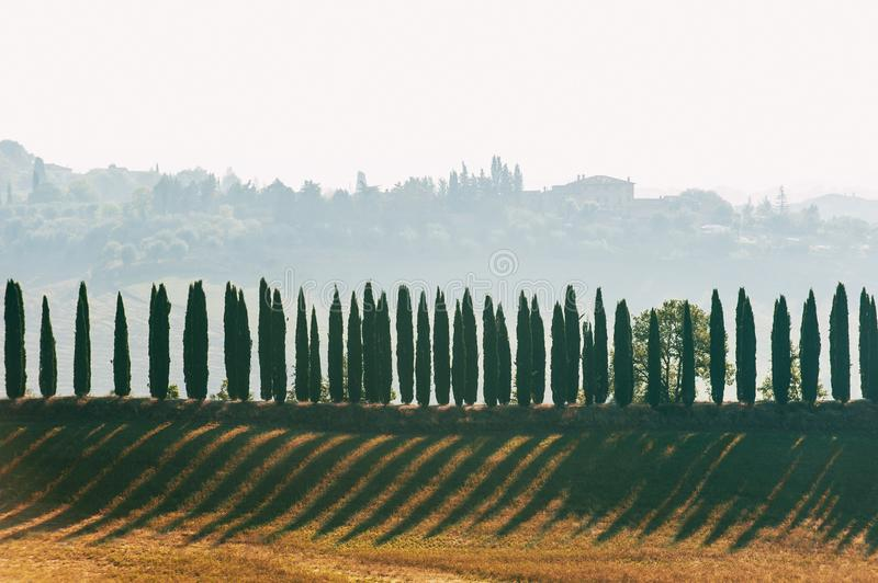Spectacular magical Tuscany lane of italian evergreen cypress. stock images