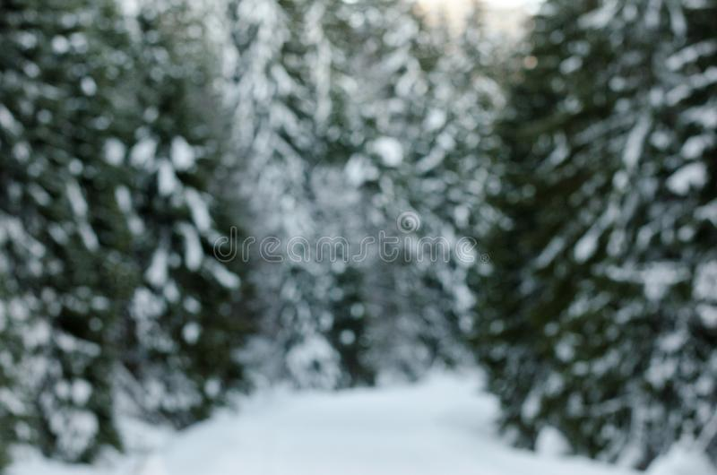 Spectacular panorama blurred background, trees covered with white snow. A royalty free stock photos