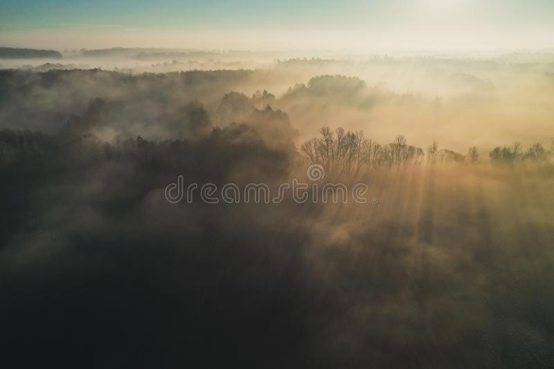 Spectacular view from drone on sunbeam between trees in misty morning stock photo