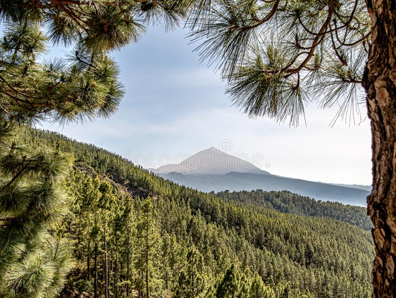 Spectacular view over the woods to the mountain stock image