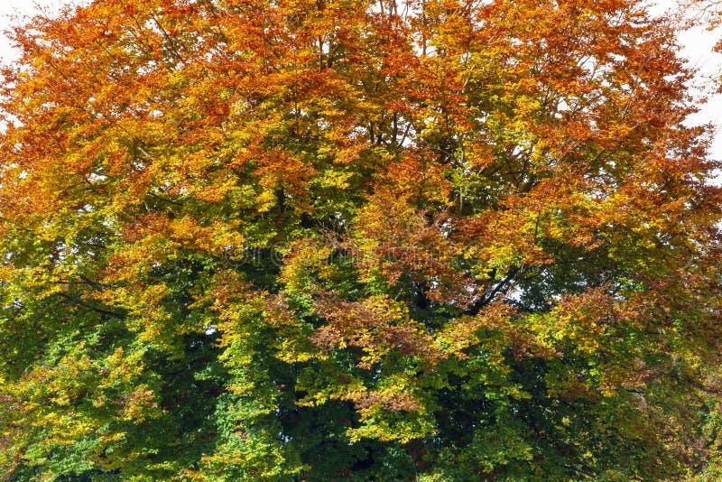 Spectre de couleurs de l'arbre d'automne image stock